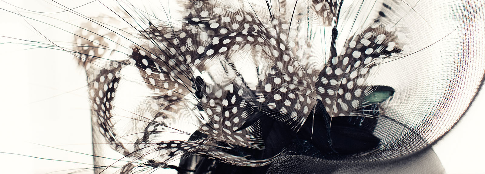 Close up of black and white hat with feathers